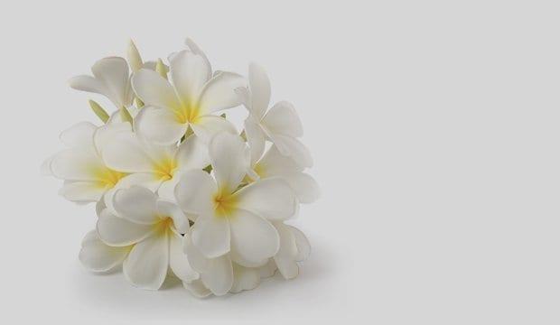 קוסמטיקה טבעית - פרח